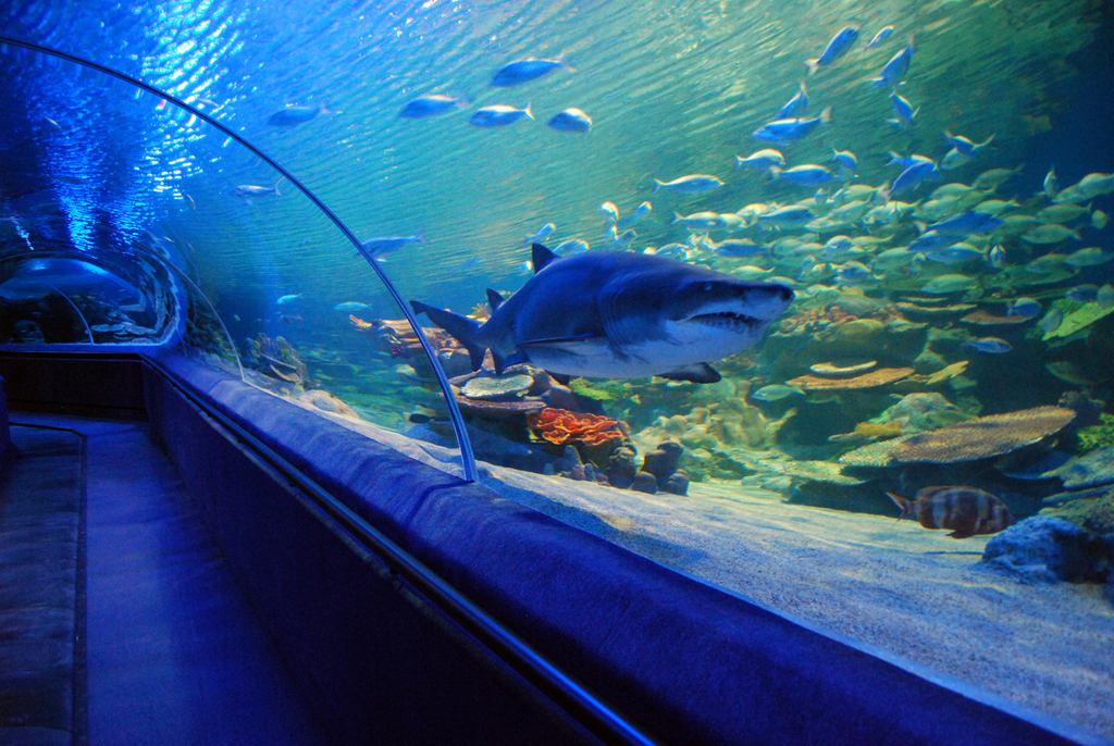 Istanbul Underwater World Marinescape Eco Aquariums